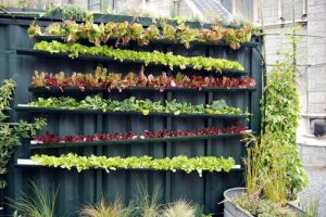 new-concept-vertical-vegetable-garden