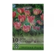 Bulbi lalele Peach Blossom, 10 bulbi