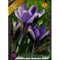 Bulbi de Branduse (CROCUS), Spring Beauty, 15 bulbi