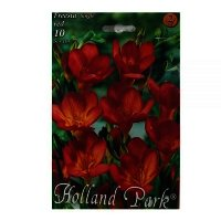 Bulbi Freesia single red, 10 bulbi