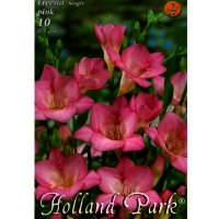 Bulbi Freesia single pink, 10 bulbi