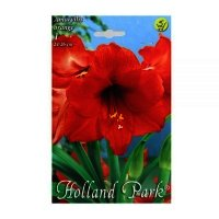 Bulbi Hippeastrum orange, 1 bulb
