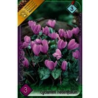 Bulbi Cyclamen hederifolium, 3 bulbi