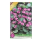 Bulbi Cyclamen coum, 3 bulbi