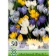 Bulbi de Crocus vernus mix, 50 bulbi
