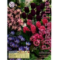 Bulbi Colectie Purple-pink, 50 bulbi