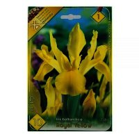 Bulbi Iris Hollandica Royal Yellow ,10 bulbi