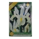 Bulbi Iris hollandica White van Vliet Holland ,10 bulbi