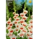 Bulbi Gladiole Shocking,10 bulbi