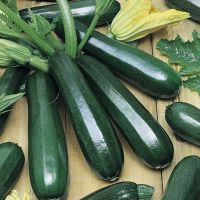 Seminte Zucchini Black beauty, 4 gr.