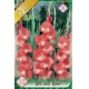 Bulbi Gladiole Spic and Span, 10 bulbi