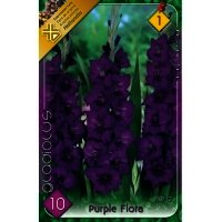 Bulbi Gladiole Purple Flora, 10 bulbi