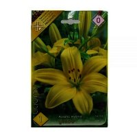 Bulbi Crin Asiatic Yellow , 1 bulb