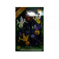 Bulbi Iris Holandica mix, 10 bulbi