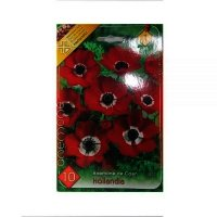 Bulbi Anemone de Caen Hollandia , 10 bulbi